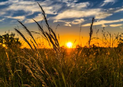 Ökologie, Klima, Umwelt